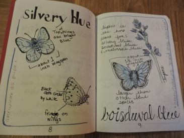 blue butterflies